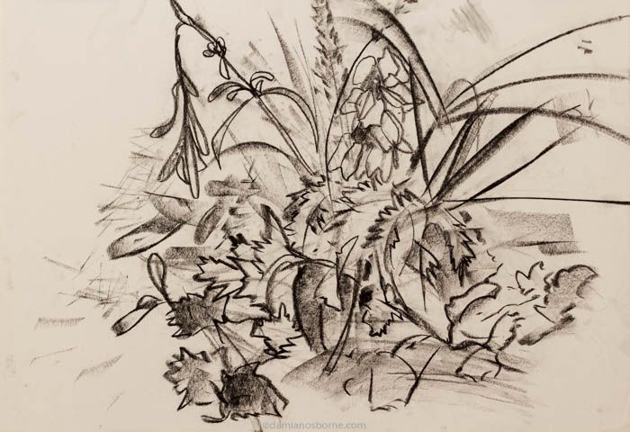 abstract drawing nature, still life charcoal drawing leaves and grasses by Damian Osborne