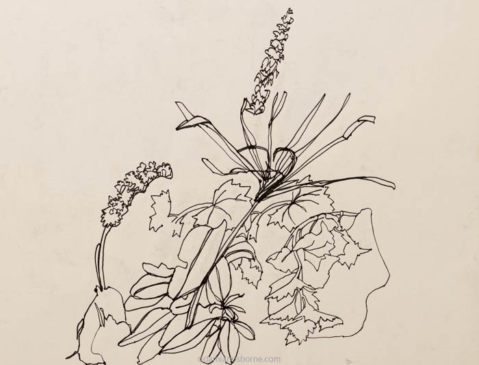 abstract drawing nature, still life pen drawing of flowers and leaves by Damian Osborne