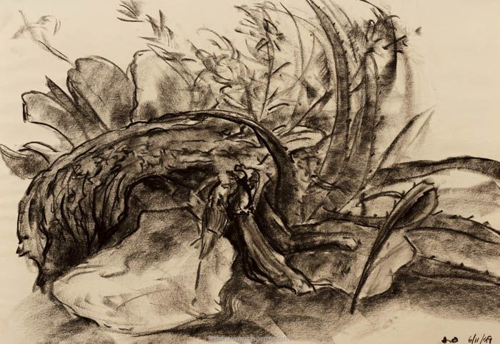 abstract drawing nature, charcoal still life with wood, rocks and vegetation Damian Osborne