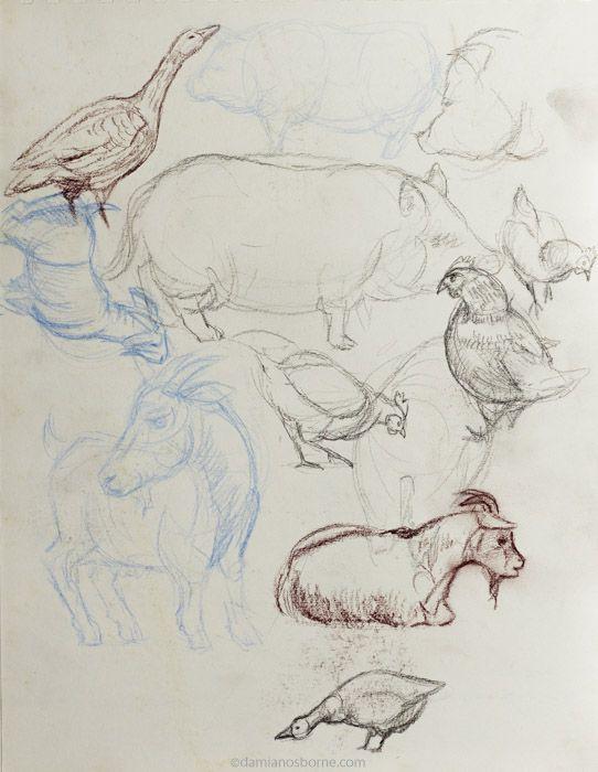 Gesture sketches, farm animals no1, Damian Osborne, 2019