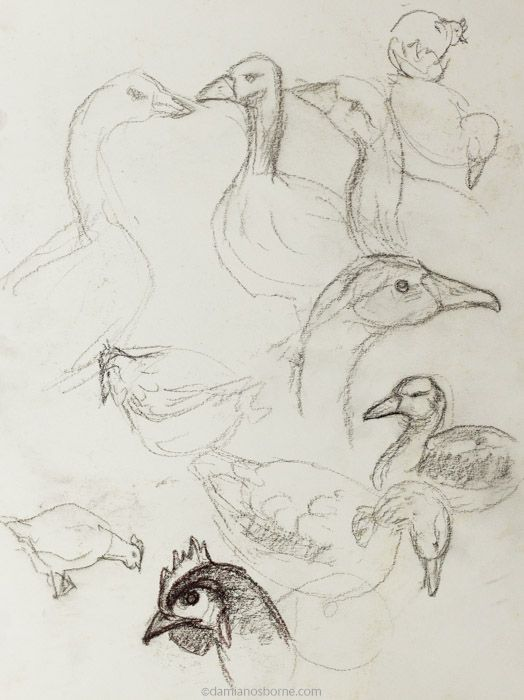 Gesture drawings, farm animals, geese and chickens, Damian Osborne, 2019