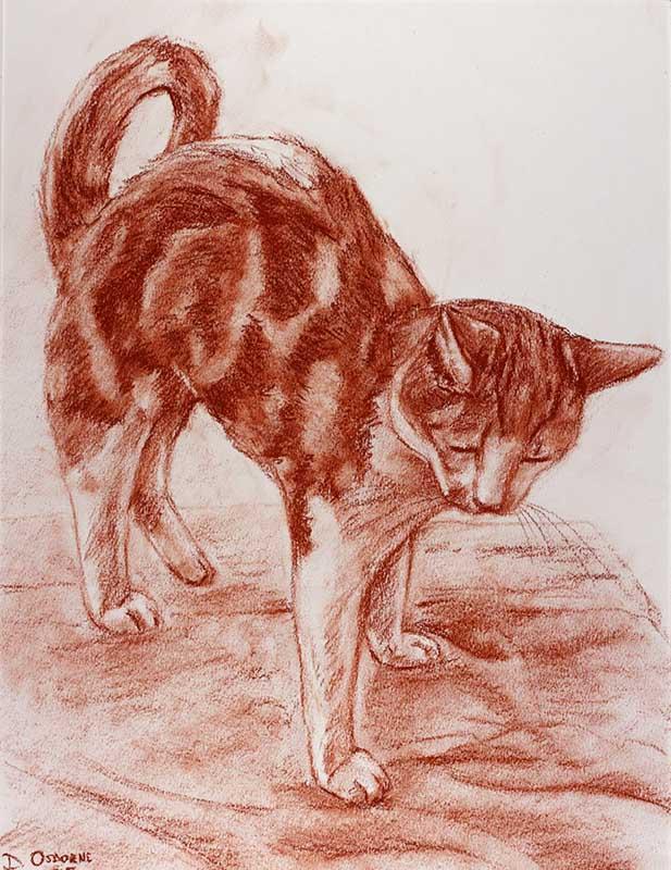 Ginger Cat conté
