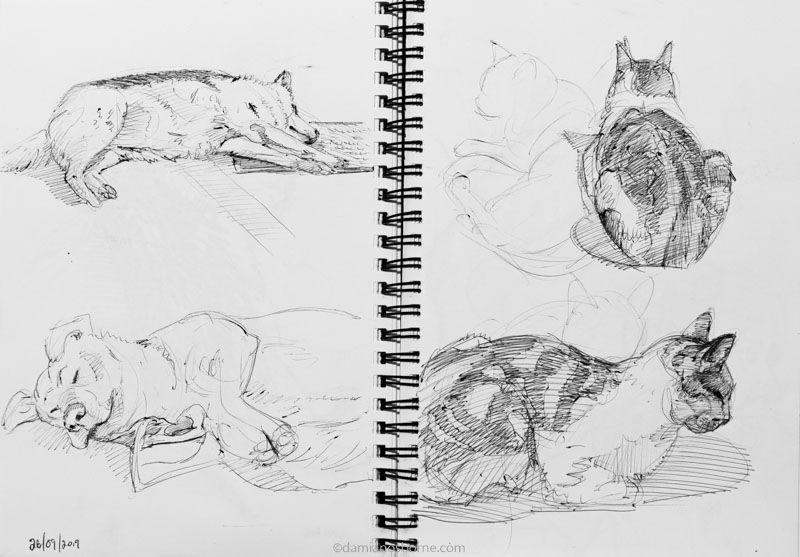 Dog and cat pen studies, Damian Osborne